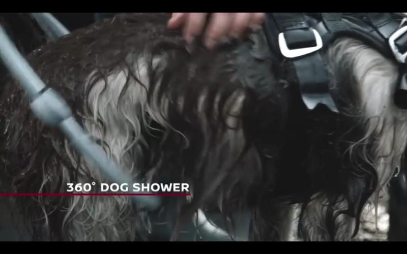 n_dog_10